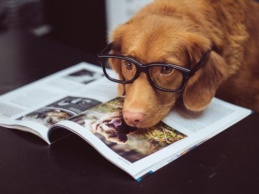 ILMDSM dog expert