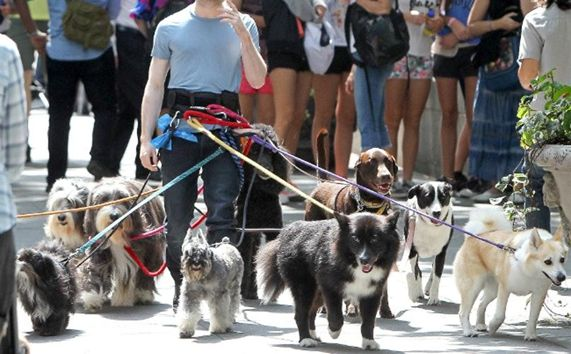 ILMDSM many dogs