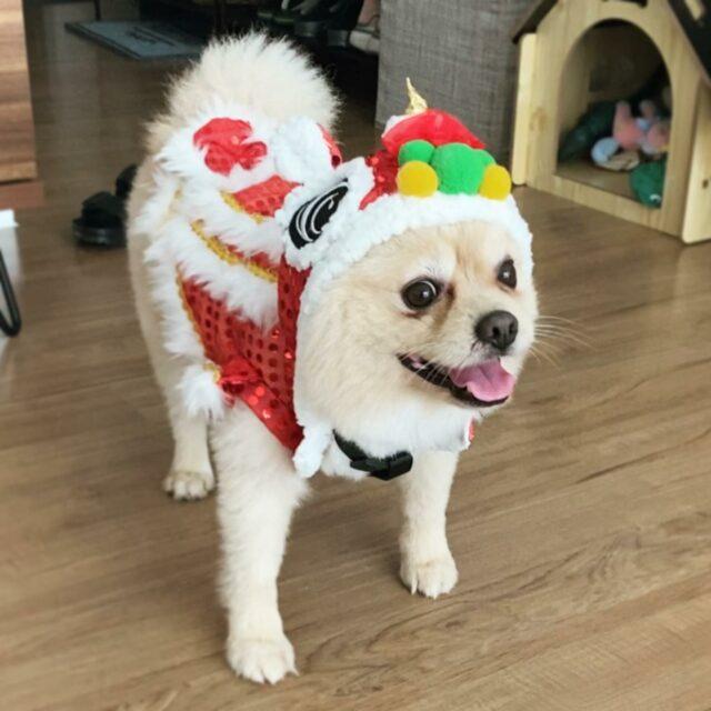 dog dancing dragon