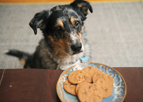 Danger Dog Eyes Cookies