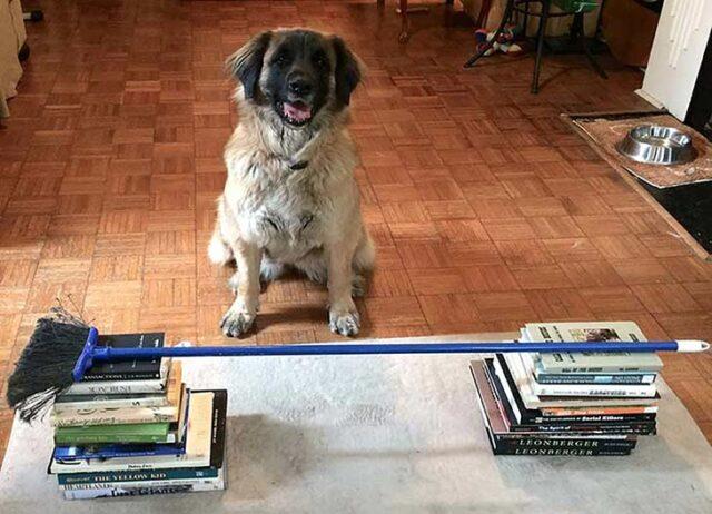 Emi Book Jump dog workouts