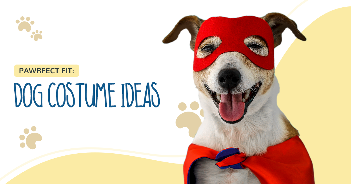 https://ilovemydogsomuch.com/wp-content/uploads/2021/02/ILMDSM-Article-14-Dog-Costumes-v1.png