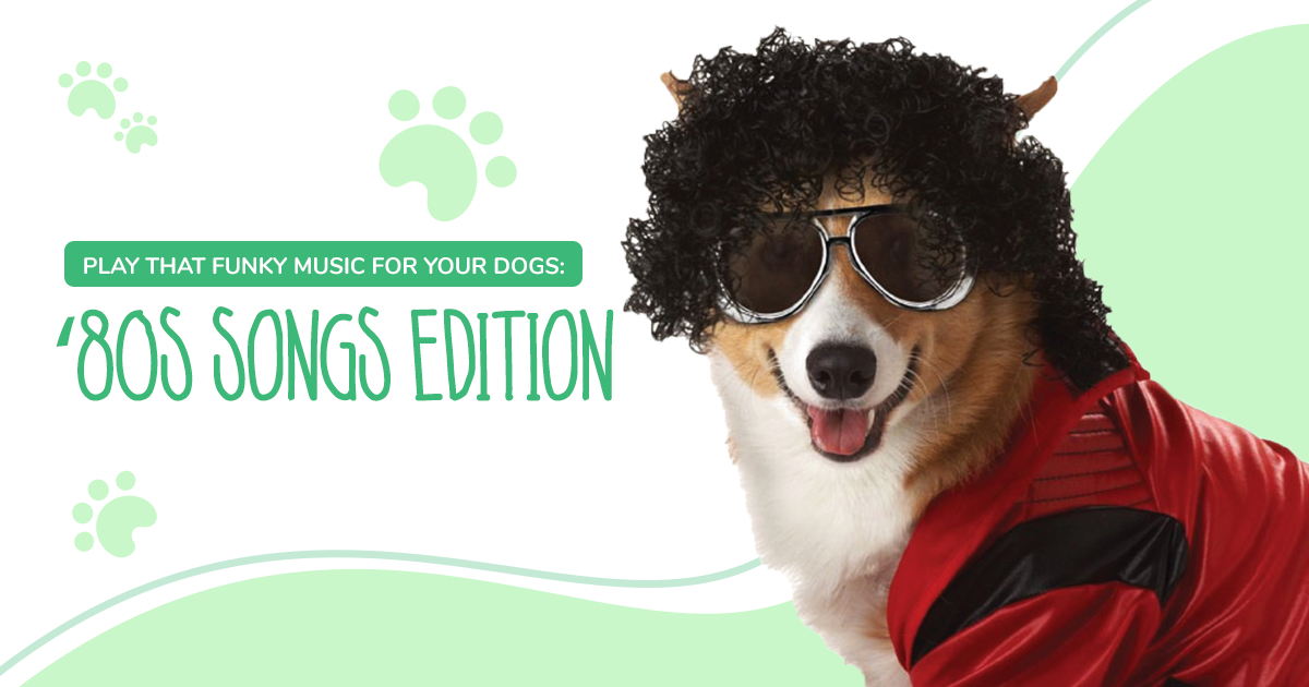 https://ilovemydogsomuch.com/wp-content/uploads/2021/02/ILMDSM-Article-15-80s-Music-For-Dogs-v1.png