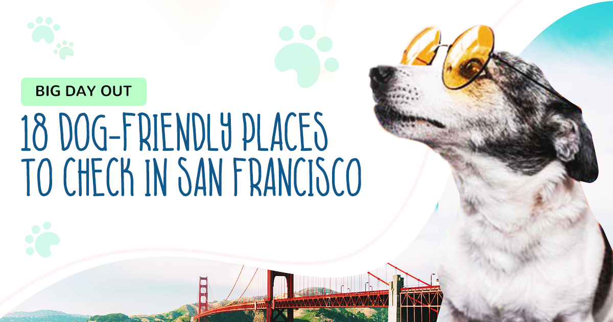 https://ilovemydogsomuch.com/wp-content/uploads/2021/02/ILMDSM-Article-7-Places-To-Bring-Your-Dog-in-SFO.png