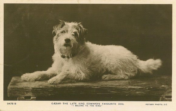 King Edward VIIs Dog Caesar