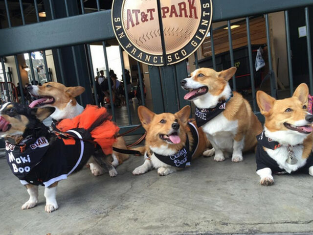SF Giants and Dogs