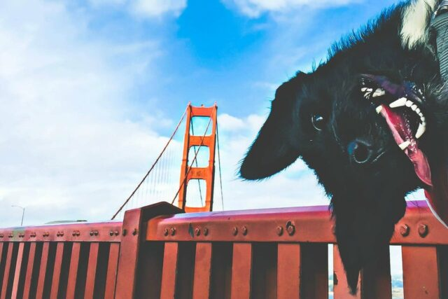San Francisco with Dogs