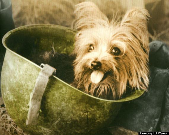 The Famous War Dog Smoky