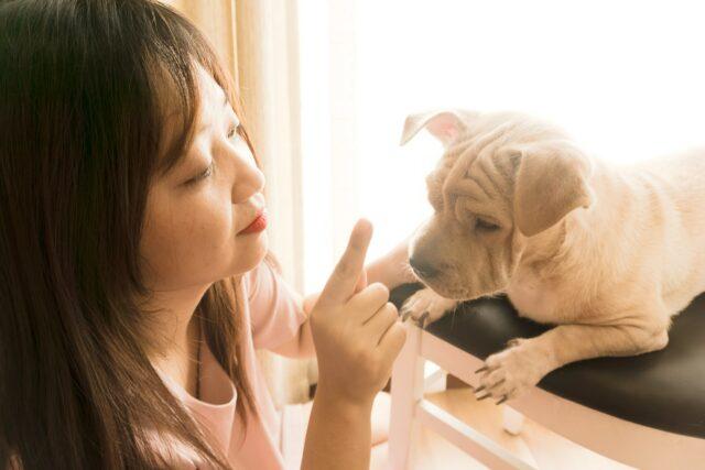 dog and mom training bad habits