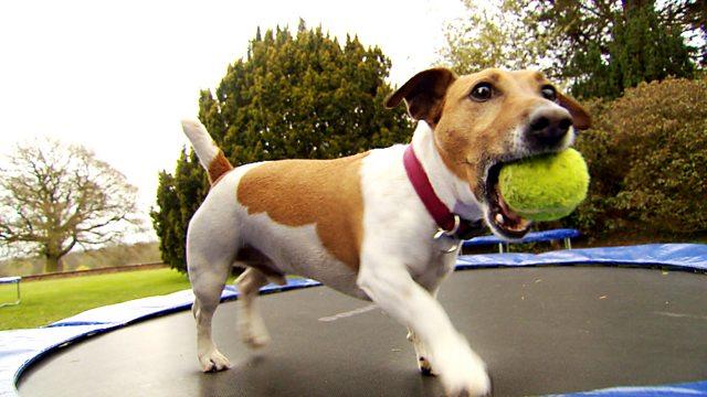 dog exercise workout trampoline