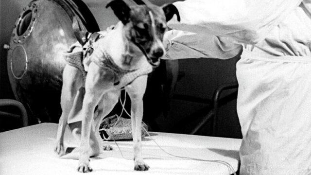 dog in history laika