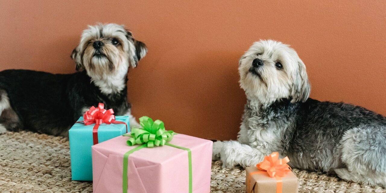https://ilovemydogsomuch.com/wp-content/uploads/2021/02/dog-present-gift-1280x640.jpg