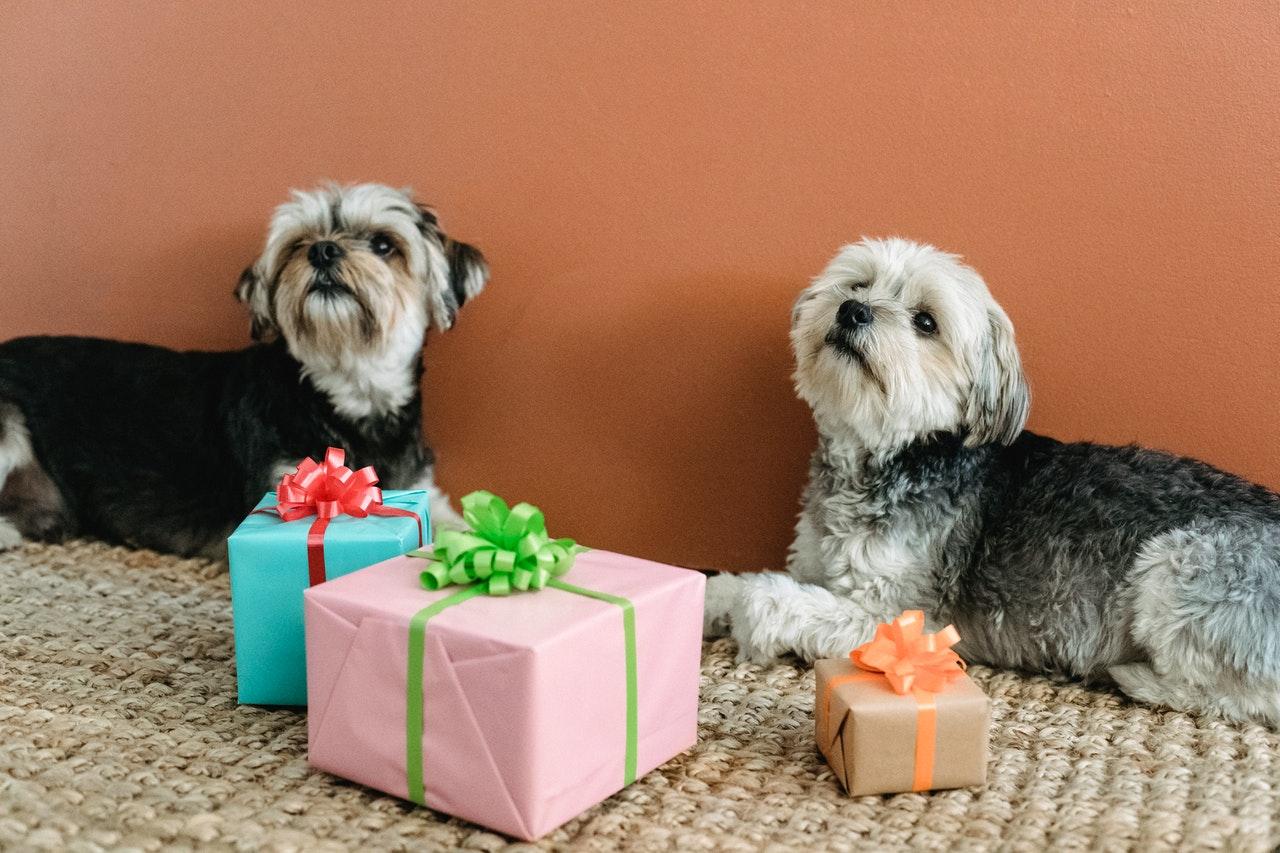 https://ilovemydogsomuch.com/wp-content/uploads/2021/02/dog-present-gift.jpg