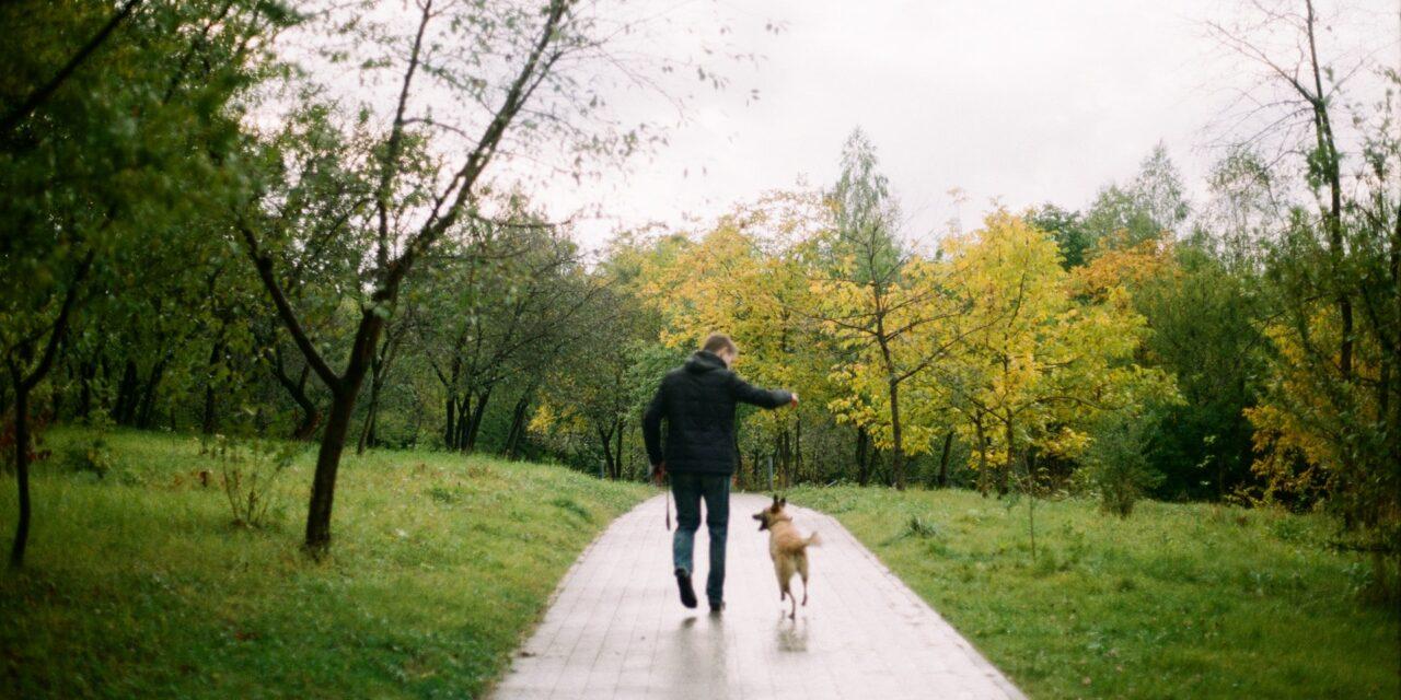 https://ilovemydogsomuch.com/wp-content/uploads/2021/02/dog-walking-in-park-with-fur-dad-1280x640.jpg