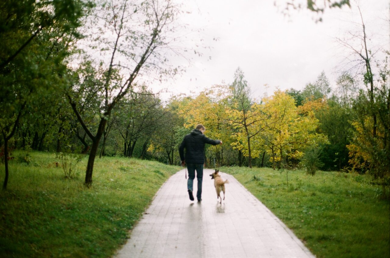 https://ilovemydogsomuch.com/wp-content/uploads/2021/02/dog-walking-in-park-with-fur-dad-1280x849.jpg