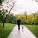 dog walking in park with fur dad