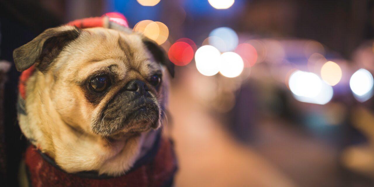 https://ilovemydogsomuch.com/wp-content/uploads/2021/02/dog-with-lights-superstar-1280x640.jpg