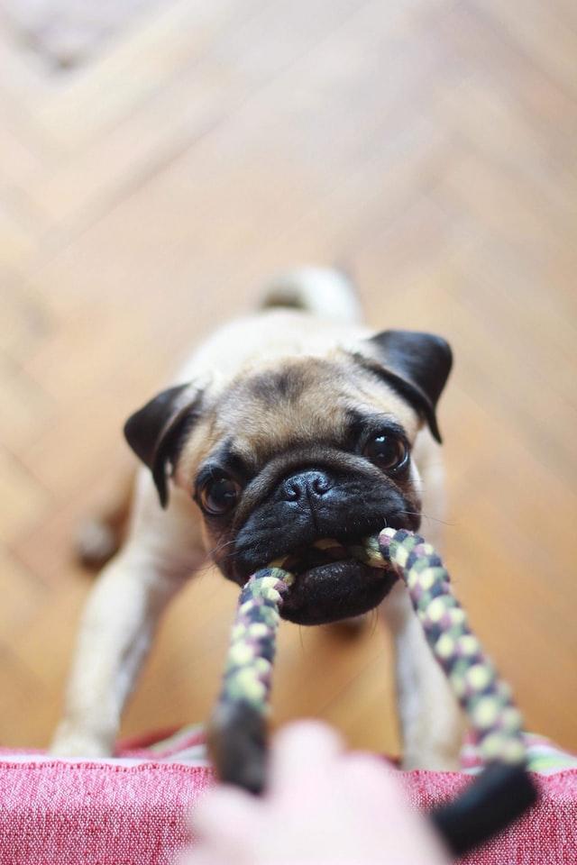 dog workout resistance pulling rope