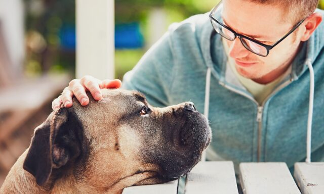 dogs help recover from illness