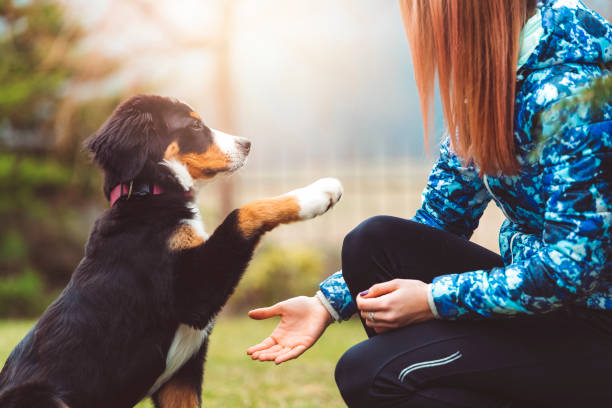 playing with dogs