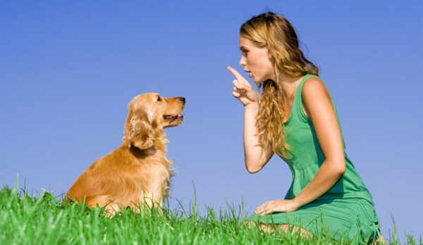 which dogs breeds are smart