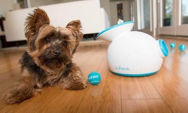 Dog Automatic Dog Launcher Dog Gadgets