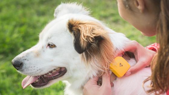 Dog GPS Dog Gadgets