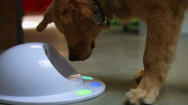Dog Remote Tracker