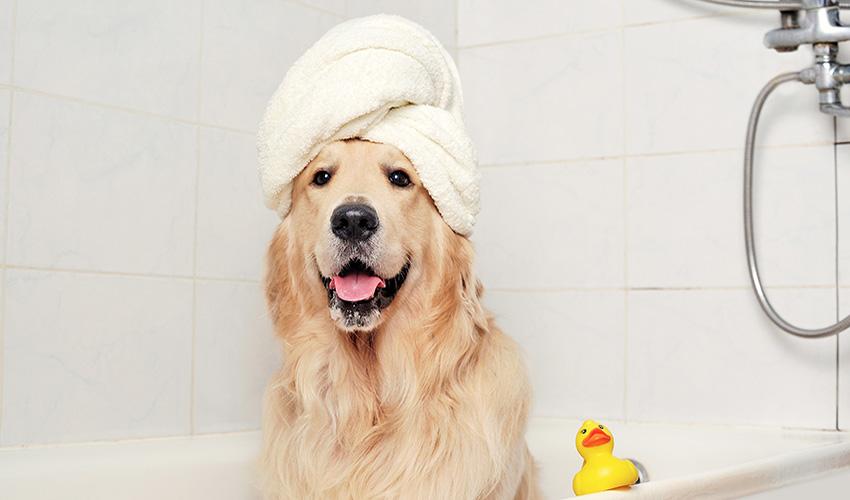 https://ilovemydogsomuch.com/wp-content/uploads/2021/03/Dog-bath.jpg