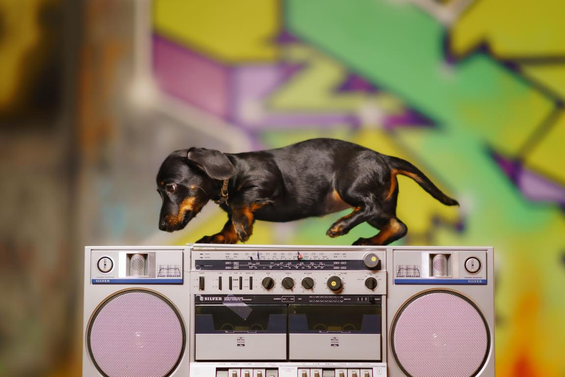 https://ilovemydogsomuch.com/wp-content/uploads/2021/03/Dog-on-a-boombox.jpg