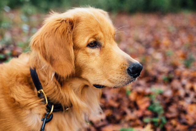 Dog wearing a collar
