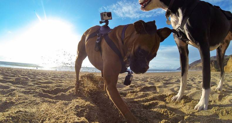 https://ilovemydogsomuch.com/wp-content/uploads/2021/03/GoPro-Pet-Harness_Dog-Gadgets.jpg
