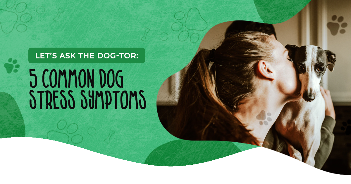 Let's Ask the DOG-tor: 5 Common Dog Stress Symptoms