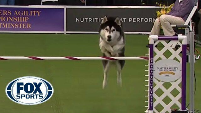 Lobo_Dog Sports