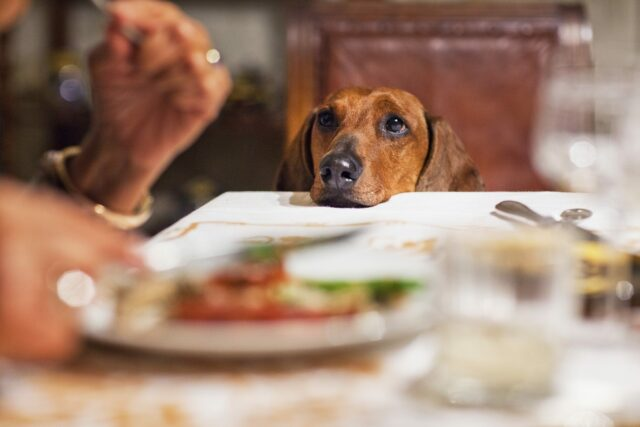 Table scraps Dog Food