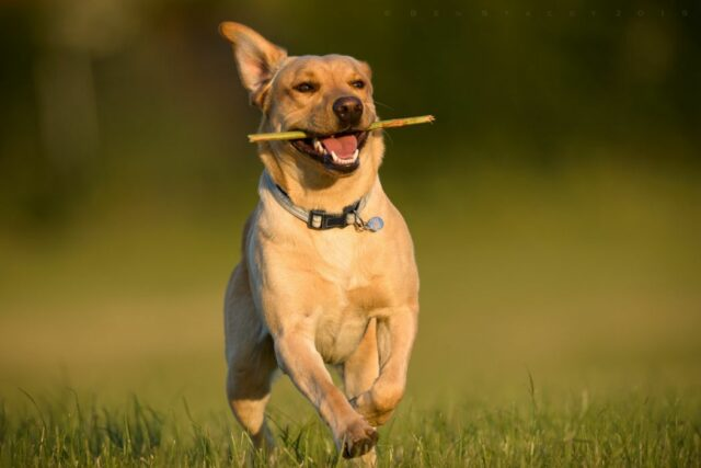 addressing your dogs habits