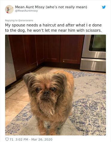 dog groom fail