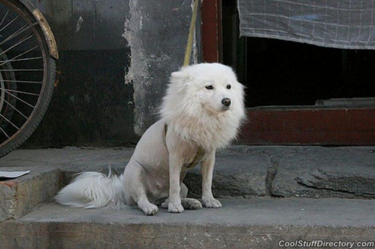 https://ilovemydogsomuch.com/wp-content/uploads/2021/03/dog-grooming-fail-1280x850.jpg