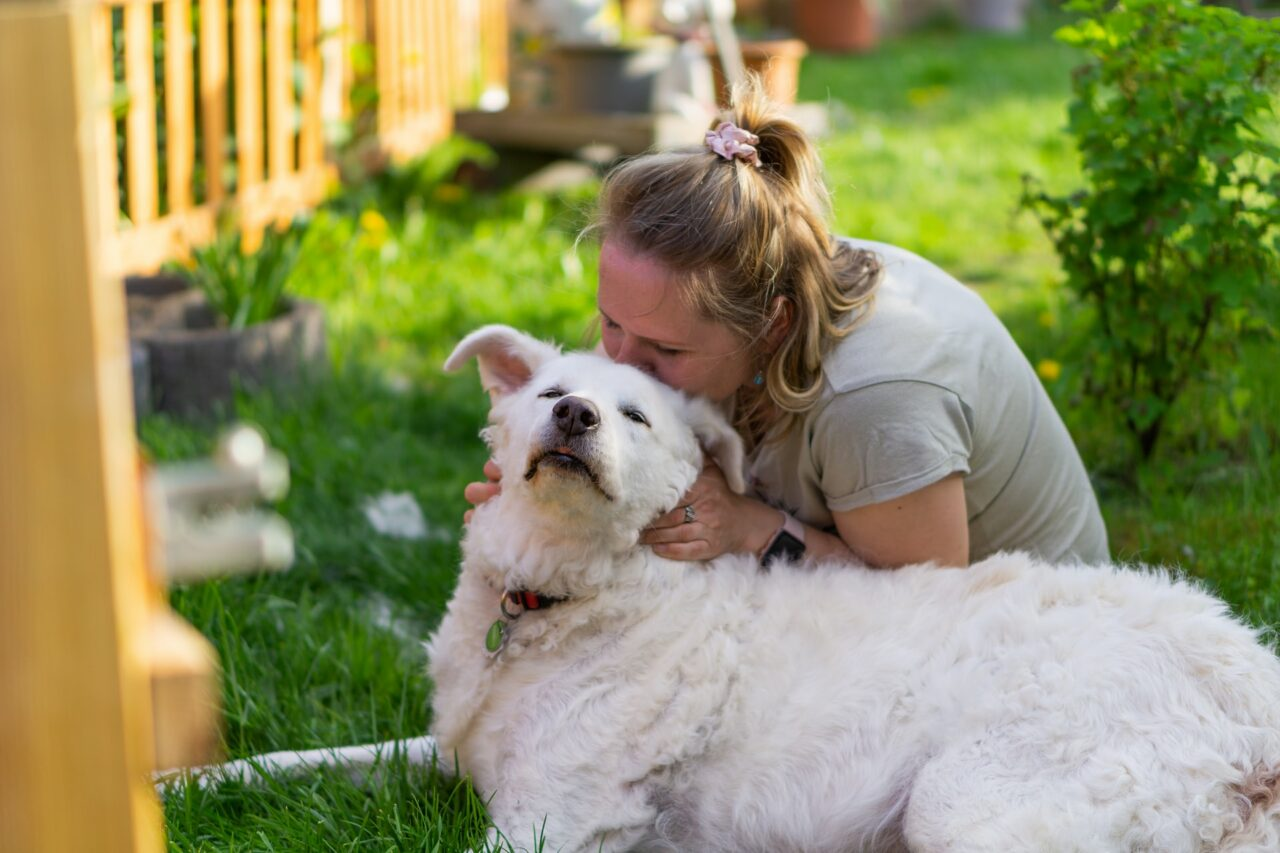 https://ilovemydogsomuch.com/wp-content/uploads/2021/03/dog-help-pandemic-1280x853.jpg