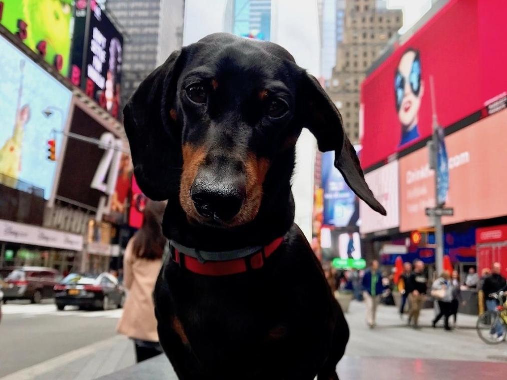 https://ilovemydogsomuch.com/wp-content/uploads/2021/03/dog-in-new-york.jpg