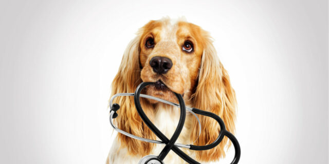 dog medical care