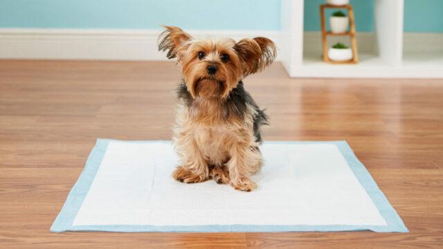 dog puppy pads