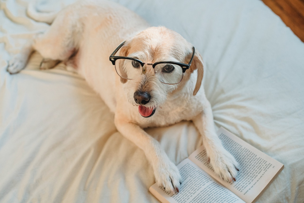 https://ilovemydogsomuch.com/wp-content/uploads/2021/03/dog-reading-book.jpg