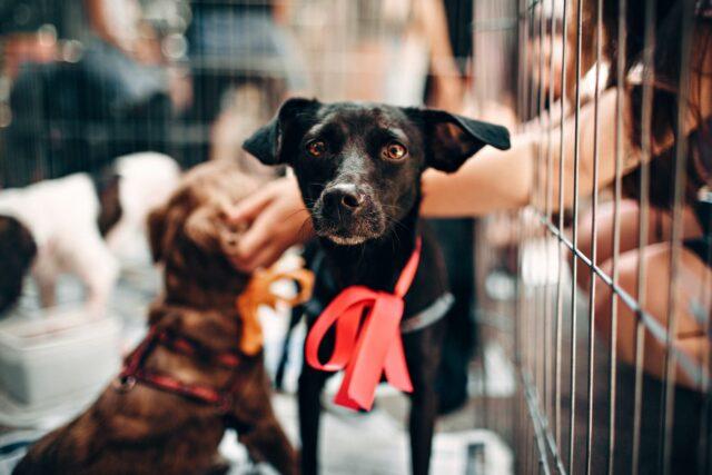 dog rescue dog cage