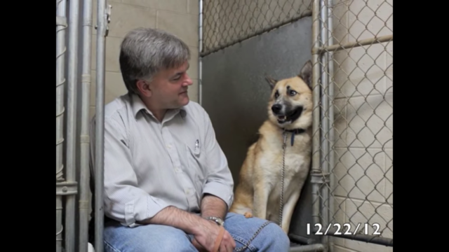 dog rescue stories jimmy
