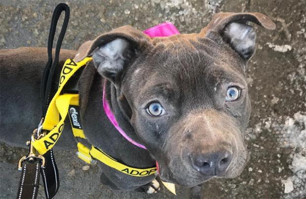 dog rescue stories plum