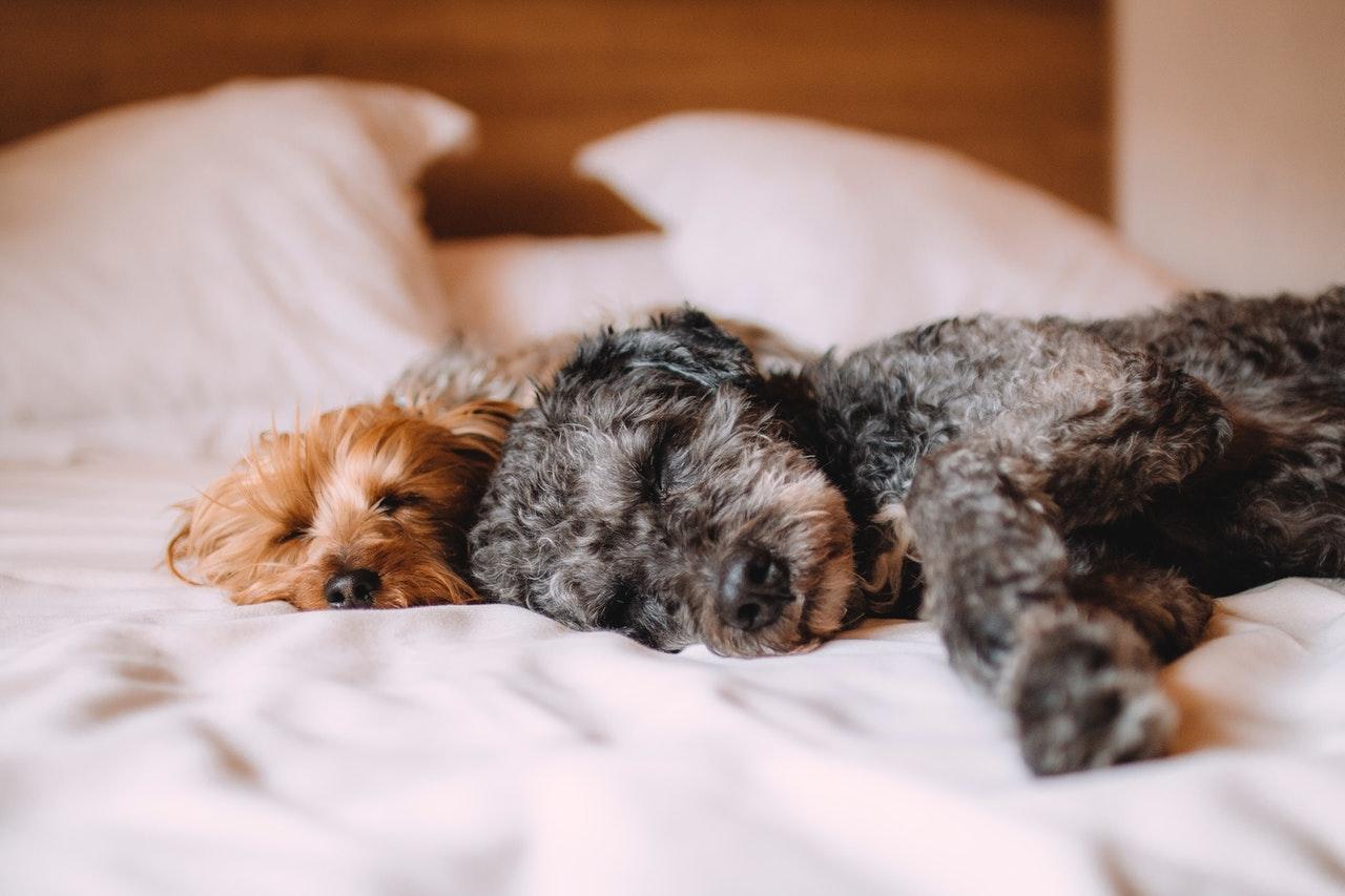 https://ilovemydogsomuch.com/wp-content/uploads/2021/03/dog-sleeping-relaxing-music.jpg