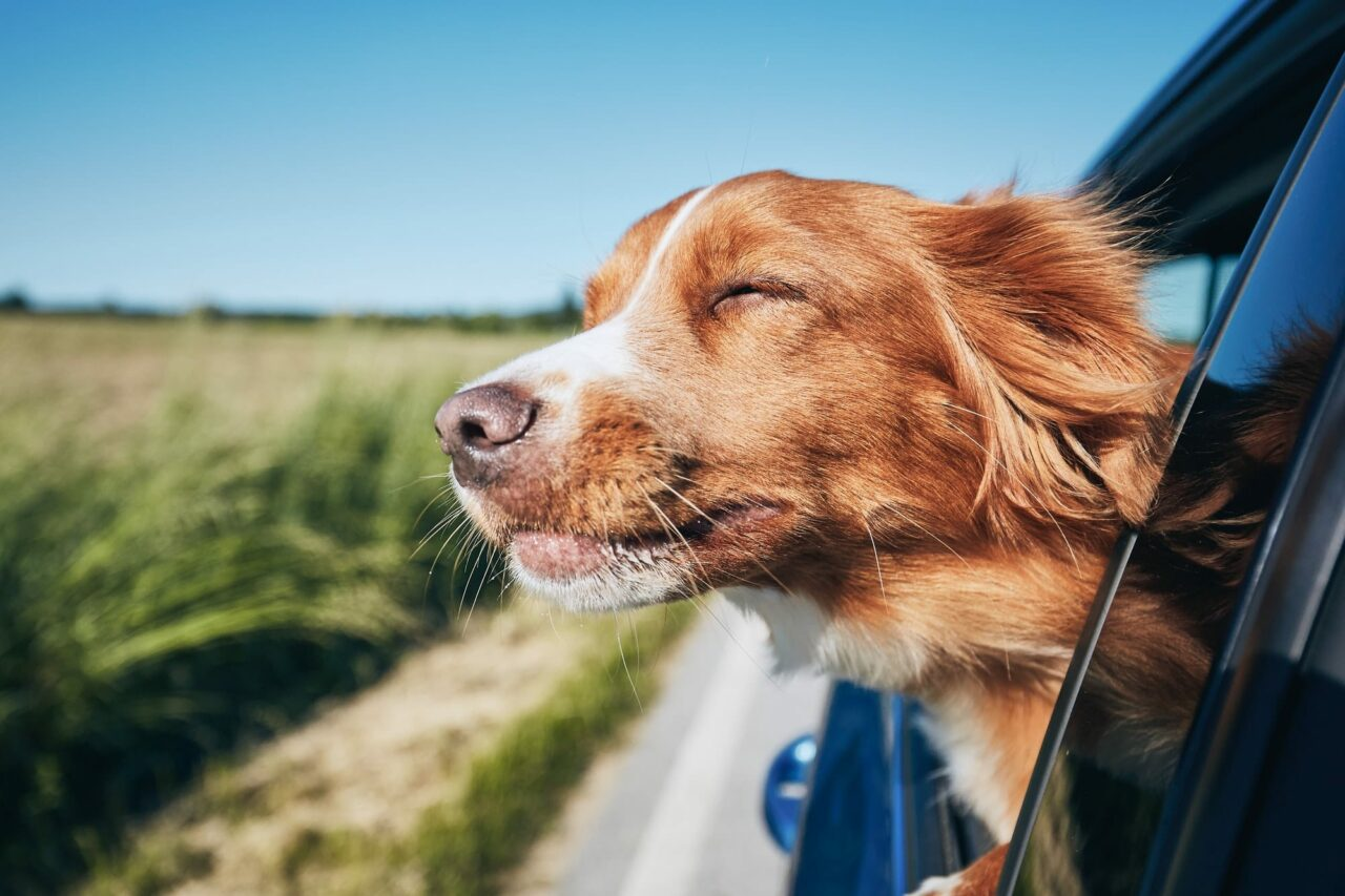 https://ilovemydogsomuch.com/wp-content/uploads/2021/03/dog-travel-by-car-1280x853.jpg