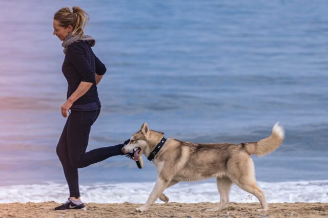 dog obesity_fitness and exercise_off-leash