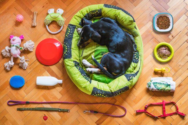Dog bed or blanket to lie on